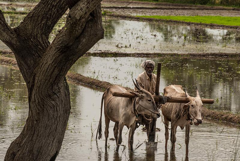 Kerala carri e buoi1