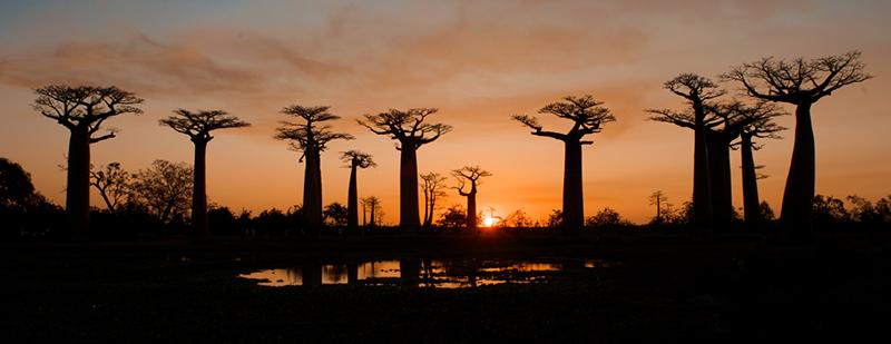 Madagascar-Baobab-Boulevard