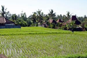 Bali 0557