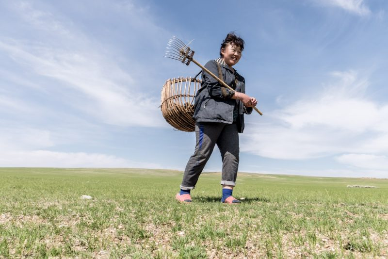 Questa donna raccoglie il letame dalla prateria per seccarlo e usarlo in inverno come combustibile per la stufa nella sua ger. Foto: © Roberto Gabriele