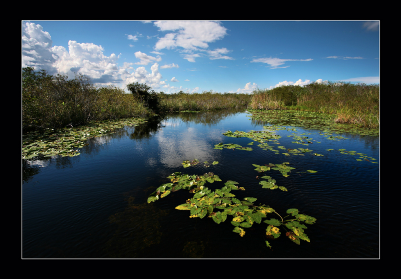 Florida USA Everglades Lubright