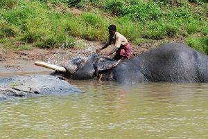 Kerala parco2