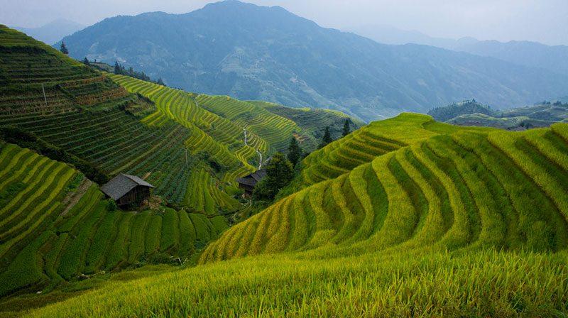 Cina Longsheng - Foto: © Oarranzli